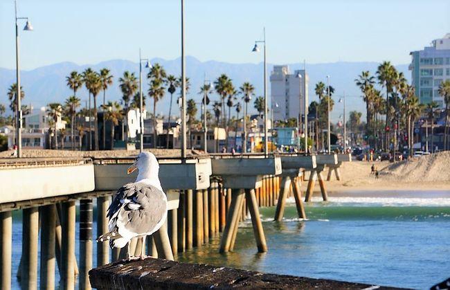 はい。かなたです。今回も引き続きサンクスギビングのホリデー旅行のお話です。今日はロサンゼルスにあるベニスビーチに釣りにやってきました。とは言っても昼間はロサンゼルス観光が待っているので、朝食前の1時間だけ相方に釣りの許可をもらいました。(^^;)<br /><br />場所はコチラ。ベニスビーチはお隣のサンタモニカと並び、とても有名なビーチなので名前だけでも知っている人も多いと思います。オイラは今回訪れるのが初めてなので、何が釣れるかもよくわからなかったのですが、それも楽しみでした。<br /><br /><br />また、この「ベニスビーチでお気軽フィッシング 。」の詳細も含め、アメリカでの釣り/アウトドアについてこちらのサイトで紹介しています。興味のある方は是非。<br />https://fishing-outdoor.com