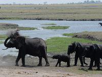 南部アフリカ4カ国7日間の旅(4)チョベ国立公園(ボツワナのサファリ)