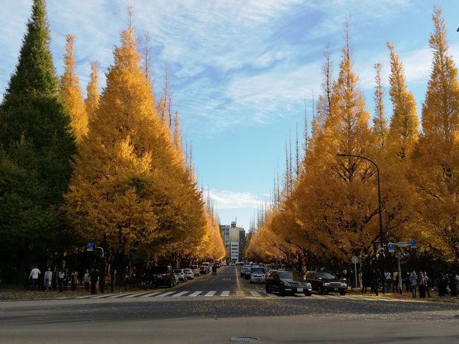 12月だというのに最高気温が20度を超えた今日の東京。<br /><br />趣味を楽しんでから、前々から気になっていた神宮外苑いちょう並木に行ってきました。<br /><br />汗ばむほどの良いお天気に恵まれ、黄葉が青空に映えます。<br />赤い紅葉も綺麗ですが、黄葉も良いですね!!