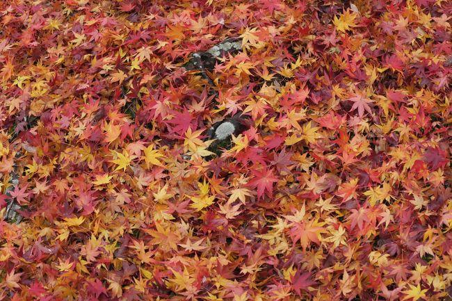 (写真は東福寺の敷紅葉12/03)<br /><br /> 紅葉を見るに山になくとも京都があるさ、と気づいたのは7年前。今年は台風の影響か、それとも暖冬のせいか、山はダメ。東北、奥日光、信州など全滅、 そうだ!京都へ行こう<br /><br />・逃げる秋追いかけて今日嵯峨野 (2011)<br /><br />・モミジ葉と先を競いて保津下り<br /><br />・燃え尽きてなお燃えたし敷紅葉<br /><br />・平成の時代はゆくよ音もなく<br /><br />オラ オラ <br />ボーっと生きてんじゃねーよ!<br /><br />※7年前の京都・秋<br />   https://4travel.jp/travelogue/10626367<br />