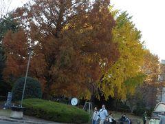 東京国立博物館の紅葉-2018年冬