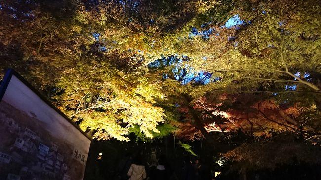 京都の紅葉を見に、数年通っていました。<br />昨年は日帰り弾丸の旅をしたので、今年はノンビリ近場の紅葉を散策に行ってきました。