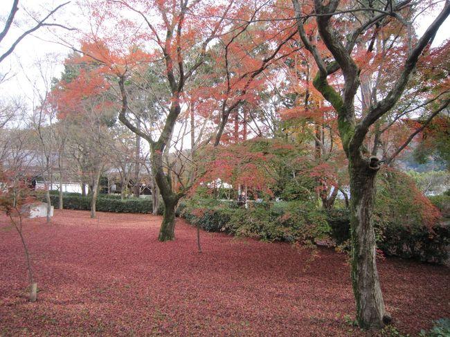 季節としては遅くなったが、京都へ行く用があったので早めに自宅を出て京都の晩秋を楽しむことにした。阪急河原町から市バスで真如堂へ向かった。真如堂前でバスを降り、急な坂道を登り真如堂の裏側から入った。紅葉は少しは残っていたが庭には一杯の紅葉の絨毯で晩秋の庭園を楽しむことができた。ただあいにく当日はお茶会のために特別公開の庭を見学できず、周辺の散策となったのは残念であった。