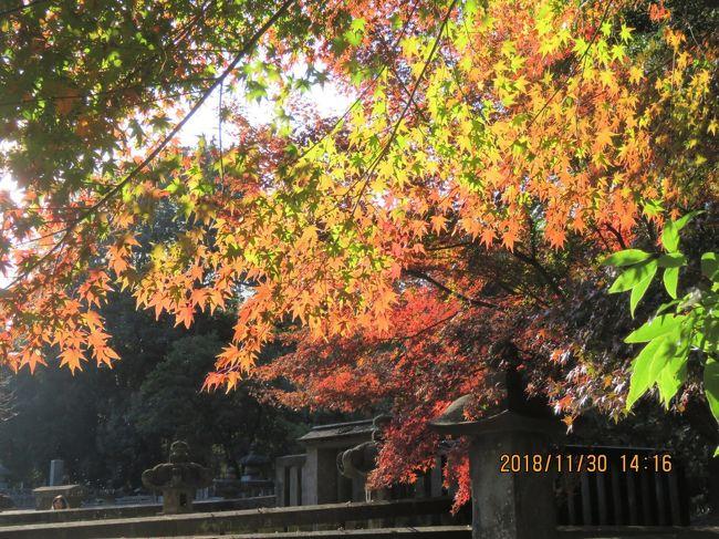11月30日、午後1時半頃に睡足軒を訪問後に平林寺に入り、半僧感応殿前より放生池、下卵塔、もみじ山、野火止塚を経由して各々の場所の美しい紅葉を鑑賞しながら、松平信綱公一族の墓所に来ました。<br /><br /><br /><br /><br />*写真は松平信綱公一族の墓所にある美しい紅葉