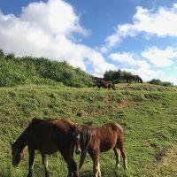 与那国島で仔馬とDr.コトー診療所