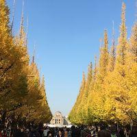 東京:神宮外苑のイチョウ並木〜表参道〜明治神宮