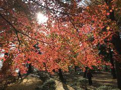 紅葉   IN   若草公園