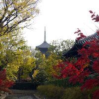 飛鳥時代と奈良時代を巡る 5泊6日のひとり旅【6日目 京都】