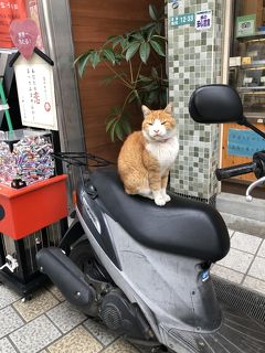 2018 11月 ふっこう割レンタカー付きフリープラン高知愛媛二泊三日の旅 松山市内散策すると猫に会いました編