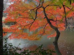 新宿御苑の紅葉_2018_一部緑の葉も残っていますが見頃でした。でも曇天(東京都・新宿区)