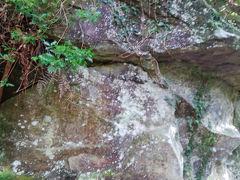 伊豆半島東部火山群・滑沢渓谷~鮎壺の滝を見る