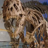 2018年 北陸西東 福井で油あげ・恐竜博物館と永平寺、お湯は「あわら」で