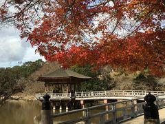 奈良公園で鹿にまみれる休日  紅葉見に来たんやけどなぁ~(^^;)