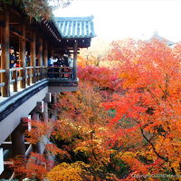 2018東福寺の紅葉狩り!