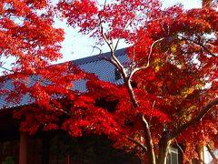 大阪池田市の紅葉・十月桜・ウォンバット(2) 久安寺の紅葉 その2。