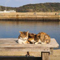 癒しの猫島