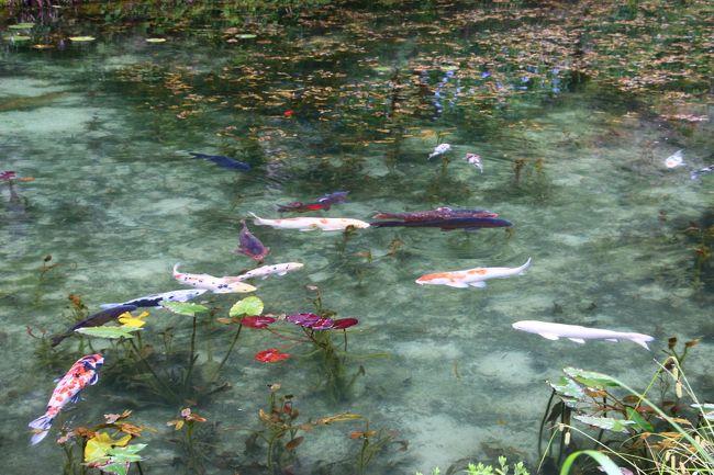 雑誌を見ていると、モネの池みたいなところがあるとのことで、行ってみた。