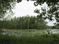 森と湖の国フィンランドは本当だった  ヌークシオ国立公園