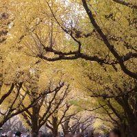 駅からハイキングで神宮外苑界隈のいちょう並木などを巡る2018�〜神宮外苑いちょう祭りと見事な並木〜