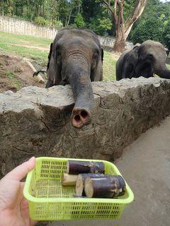 ミャンマー④:ヤンゴン動物園とダウンタウン散歩で、帰国