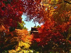 ゆく秋を惜しみながら、秋色の金剛輪寺(2018)