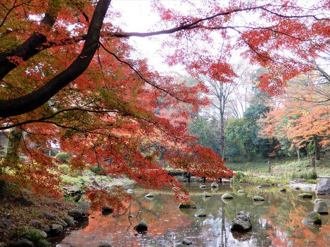 なかなか紅葉のタイミングが合わず、結局遅れ気味でしたが、<br />なんとか小石川後楽園の紅葉が見られました。<br />神宮外苑銀杏並木~豪徳寺~小石川後楽園