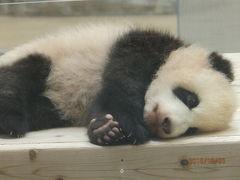 赤ちゃんパンダに会いに!いざ!和歌山初上陸♪その2
