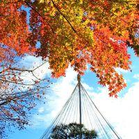 平成最後?の紅葉狩り:林試の森公園、池田山公園