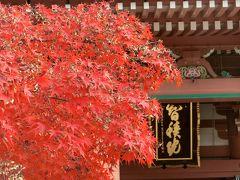 京都('18 紅葉狩り)