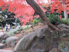 都内で紅葉を楽しむ、六義園&旧古川庭園