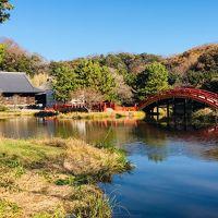 横浜市の名刹「称名寺」と、大銀杏が有名な「雷神社」に参拝してきました