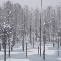 【北海道】初冬の北海道を巡る旅~旭川、札幌 4日間