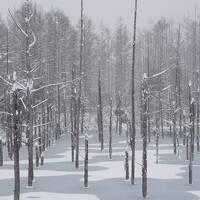 【北海道】初冬の北海道を巡る旅〜旭川、札幌