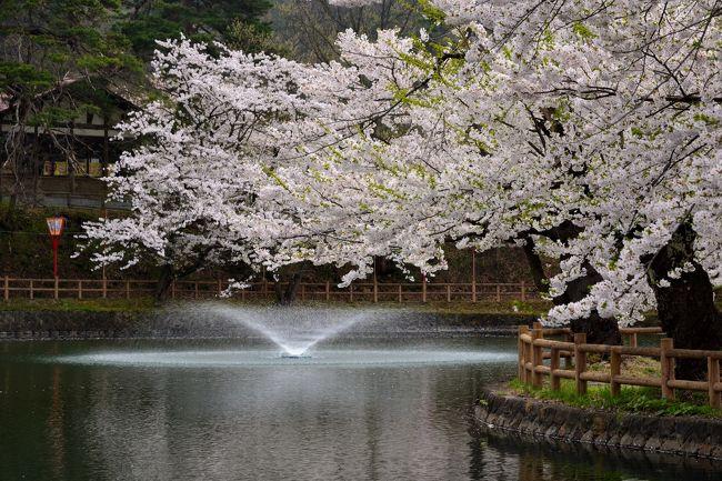 さくら舞う東北・出羽國へ【1】~桜花爛漫の真人公園&昔懐かしい増田の町並みをめぐり歩く~