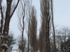 札幌・東横インに宿泊して北海道大学札幌キャンパス内を散策