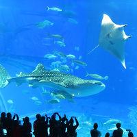 人生初なのに…沖縄は今日も雨だった〜4日目/美ら海水族館