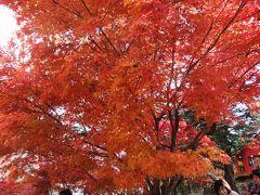 新潟六日町付近の素晴らしい紅葉狩り