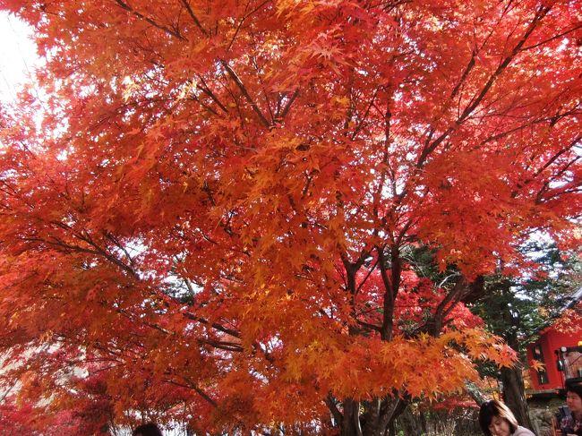 六日町付近の温泉に入りながらの紅葉狩りを楽しんできました、素晴らしい紅葉でした、六日町といえばコシヒカリの産地ですね、お米はさすがい美味しかったです、昼・夕食は勿論確かに美味しかったです、紅葉は三か所巡り<br />ました、清津狭のトンネルよりの紅葉、八海山ロウプウェーよりの景色は<br />霧のため見えませんでした、寒かったです、翌日は奥五十渓谷・十字峡親水<br />公園の紅葉は素晴らしかったのと、赤城山の赤城神社の紅葉も素晴らしかった<br />です。