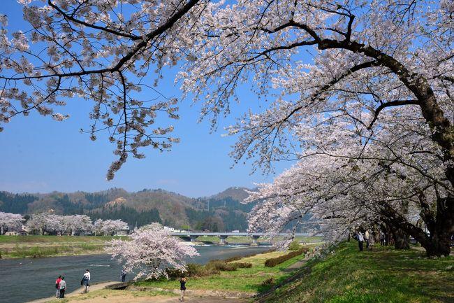 """2018年の4月下旬、桜前線が北上してきた東北・秋田県に、お花見をメインとした2泊3日の旅へ。<br /><br />内蔵で知られる「増田」の次に訪れたのが、""""みちのくの小京都""""とも称される「角館」。<br />目的はもちろん、""""日本さくら名所100選""""にも選定されている角館の桜!<br />例年4月下旬に満開となり、特に有名な武家屋敷通りのしだれ桜をはじめとして、昔ながらの町並みが残る町内を美しく彩る様は、まさに桜劇場♪<br /><br />今回は大きく三幕に分かれ、<br />・第一幕:武家屋敷通りのしだれ桜(夜景)<br />・第二幕:武家屋敷通りのしだれ桜(昼景)&武家屋敷青柳家<br />・第三幕:桧木内川堤のソメイヨシノ<br />という順番で角館町内を巡ってみました。<br /><br />しだれ桜はもうすでに散り始めって感じでしたが、桧木内川堤のソメイヨシノは今がまさに満開。<br />お天気にも恵まれ、絶好のお花見日よりの中、角館の桜を堪能することができました。"""