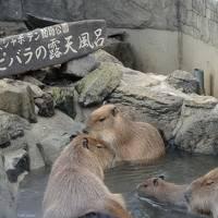 年末・年始の旅 前半は伊東・沼津温泉と海鮮満喫旅 動物にも癒されたり、修善寺で年越しそばを食す!