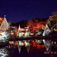 2018 肥後細川庭園 秋の紅葉ライトアップ ーひごあかりー