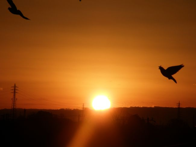 毎年、恒例の元旦の早朝に、毎朝の早朝ウォーキングを兼ねて、鷲宮神社に初詣と、帰路の途中にある陸橋上で、ご来光を楽しみました。