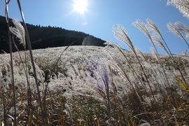 秋の優雅な箱根旅行♪ Vol.9 仙石原:黄金のすすき草原♪