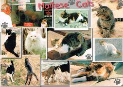 2005年 マルタ 6/7:猫と猫バスと映画と…