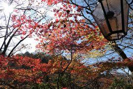 秋の優雅な箱根旅行♪ Vol.15 仙石原:ガラスの森美術館 紅葉ときらめくガラスの競演♪
