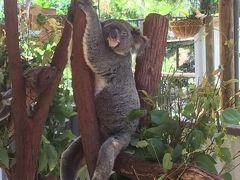 【オーストラリア】゜*・1/3作目 そうだ!ケアンズへ行こう!キュランダ高原と、熟睡のコアラくん編・* ゜