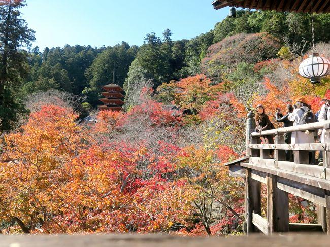 長谷寺へは娘時代、両親と妹と一緒に室生寺と合わせて訪れたことがあります。寒い季節だったので、ひと気がなくて深閑として、とても良かった記憶があります。今回は3連休の中日、それも紅葉の時期とあってかなりの人出でした。<br /><br />ところで、私にとって長谷寺はぜひ訪れたい場所でした。それも特に紅葉の季節に。<br /><br />実は以前、「紅葉の長谷寺」というジグソーパズルを持っており、そのシーンを一度自分の目で見てみたかったのです。「この角度からのまさにこの場面」を見ること、ジグソーパズルになったドンピシャのシーンを見つけた時の感動はなかなかのものなんですよ。アニメやドラマのファンがロケ地を聖地として訪れる気持ちに近いかもしれません。<br /><br />このたび念願叶って、紅葉の季節の長谷寺訪問。<br /><br />そして見つけました~、ジグソーパズルのあのシーン!人気のビューポイントは人が絶えることがなく、写真にはうまく撮れませんでしたが、しかと見て来ました。<br /><br />~*~*~*~*~*~*~*~*~*~*~*~*~*~<br /><br /><旅行スケジュール><br />★印が本旅行記で取り上げた場所<br /><br />11月23日(祝)  東京発(06:56)こだま633号で三河安城へ<br />             ツアーバスに乗り換え、高野山へ<br />           高野山 奥の院<br />           夜の壇上伽藍<br />                   <高野山宿泊>宿坊「宝城院」<br /><br />11月24日(土)    朝の壇上伽藍<br />           談山神社<br />          ★長谷寺<br />           室生寺<br />           バスで三河安城へ<br />           三河安城発(20:16)こだま682号で東京へ