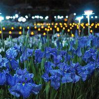 多賀城跡あやめまつり ライトアップイベント★☆水玉模様の光とアヤメ☆★