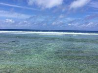 サンゴ礁のお花畑 ラロトンガ