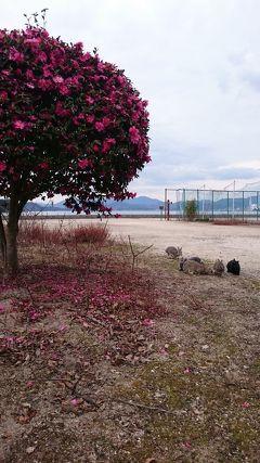 201901,北海道の冬休みは長い,広島,奈良,大阪の旅(2)うさぎと過ごす幸せ時間